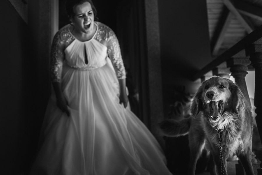 014-wedding-pets