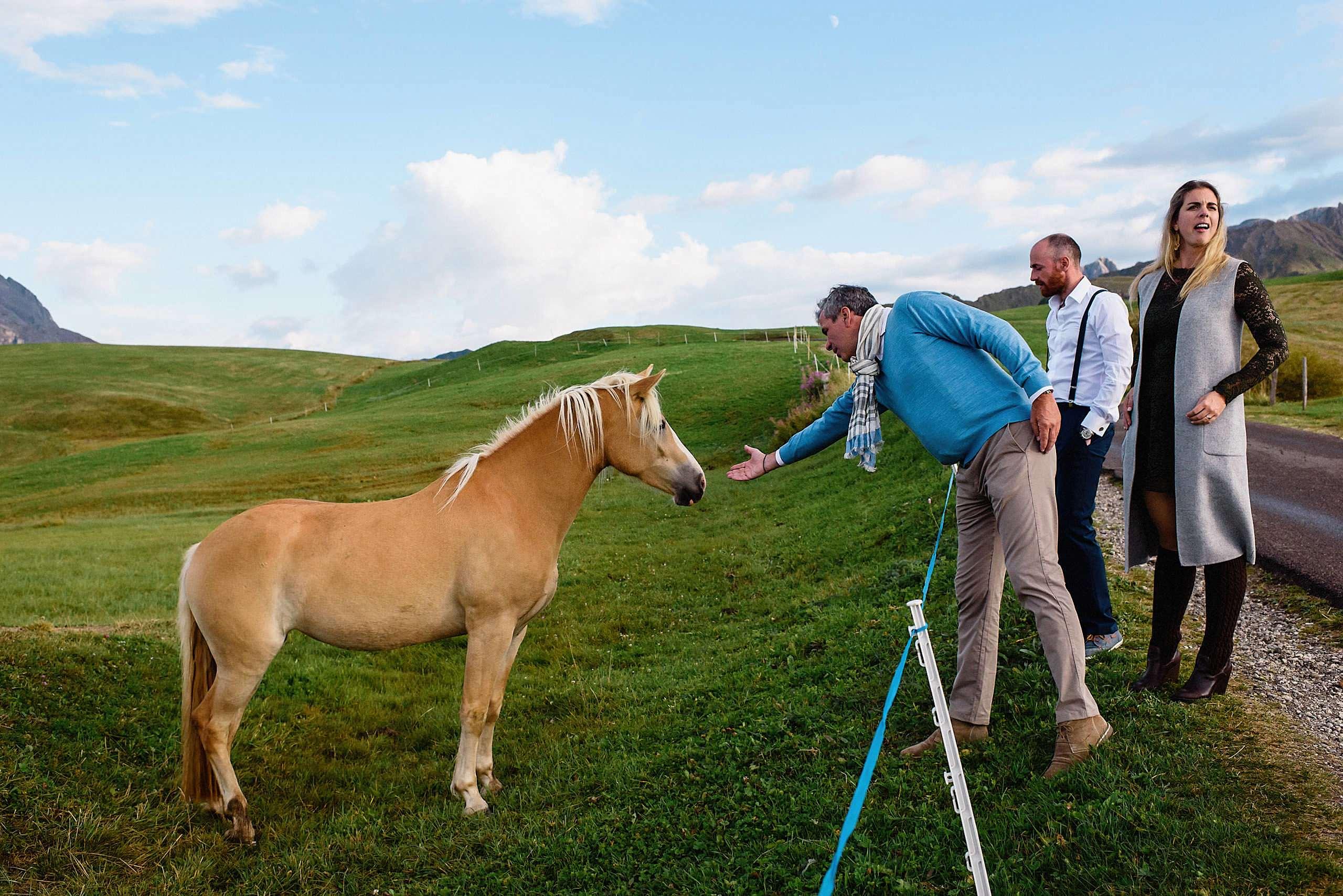 horse in seiser alm