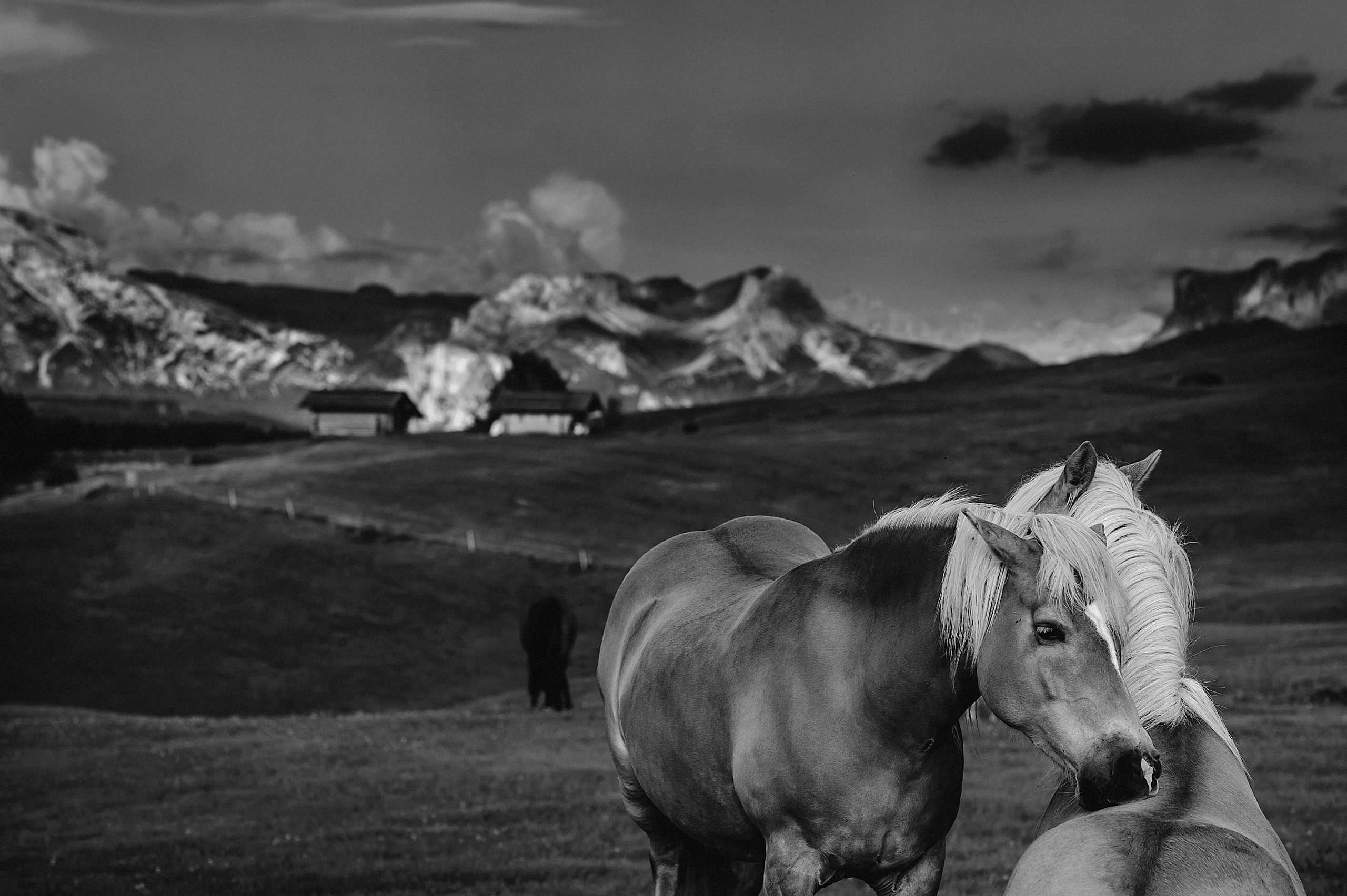 horses in dolimites italy